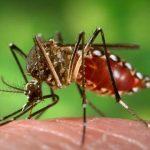 Disinfestazione-Zanzare